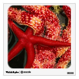 USA, Washington, Tongue Point. Blood star 2 Wall Sticker