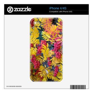 USA, Washington, Western Mountain Ash, Okanogan Decals For iPhone 4S