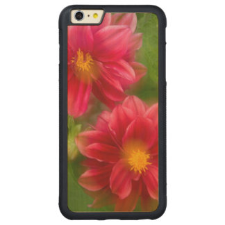 USA, Washington, Whidbey Island. Dahlia montage Carved Maple iPhone 6 Plus Bumper Case