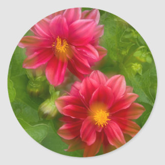 USA, Washington, Whidbey Island. Dahlia montage Classic Round Sticker