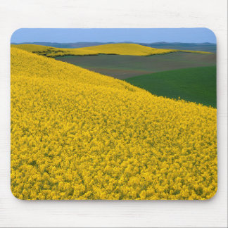 USA, Washington, Whitman County, Palouse, Canola Mouse Pad
