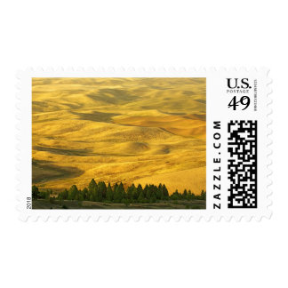 USA, Washington, Whitman County, Palouse, Wheat Postage