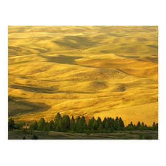 USA, Washington, Whitman County, Palouse, Wheat Postcard