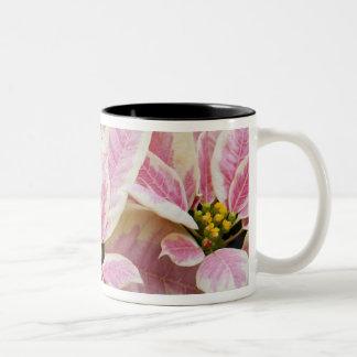 USA, Washington, Woodinville, Molbak's Nursery, Two-Tone Coffee Mug