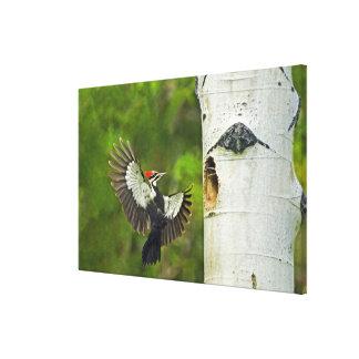 USA, Washington, Yakima. Male pleated Canvas Print