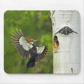 USA, Washington, Yakima. Male pleated Mouse Pads