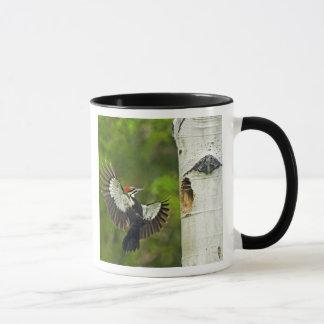 USA, Washington, Yakima. Male pleated Mug