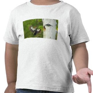 USA, Washington, Yakima. Male pleated Tee Shirt