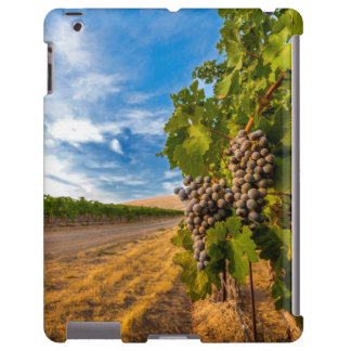 USA, Washington, Yakima Valley. Merlot Grapes