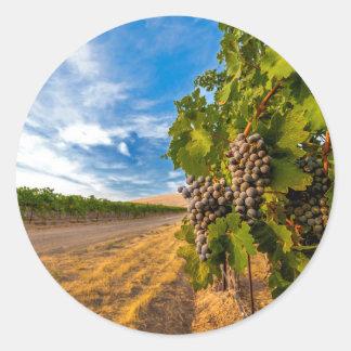 USA, Washington, Yakima Valley. Merlot Grapes Classic Round Sticker