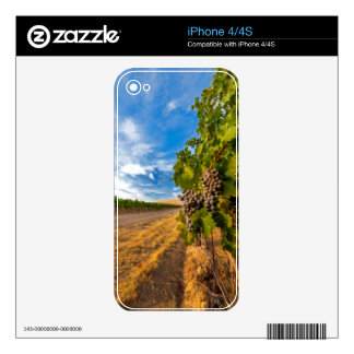 USA, Washington, Yakima Valley. Merlot Grapes Decals For iPhone 4S