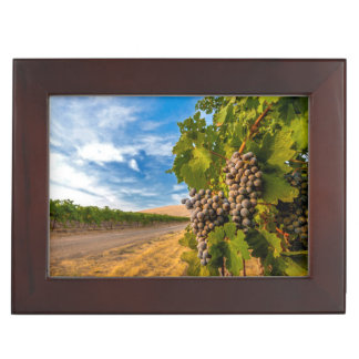 USA, Washington, Yakima Valley. Merlot Grapes Keepsake Box