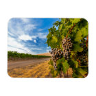 USA, Washington, Yakima Valley. Merlot Grapes Magnet