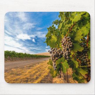 USA, Washington, Yakima Valley. Merlot Grapes Mousepads