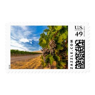 USA, Washington, Yakima Valley. Merlot Grapes Postage Stamps