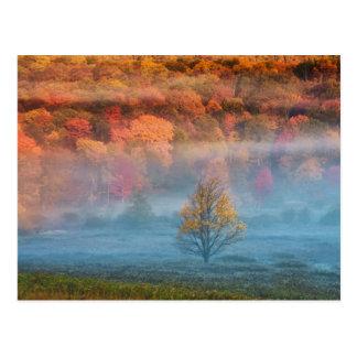 USA, West Virginia, Davis. Misty valley and Postcard