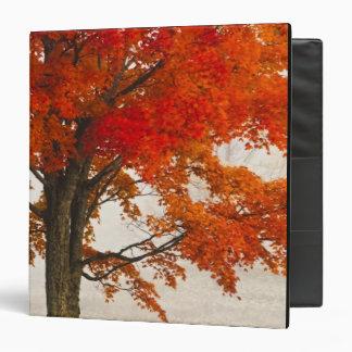USA, West Virginia, Davis. Red maple in autumn 3 Ring Binders