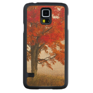 USA, West Virginia, Davis. Red maple in autumn Carved Maple Galaxy S5 Case