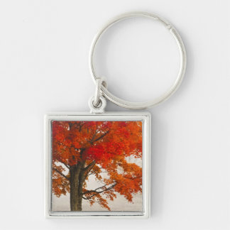 USA, West Virginia, Davis. Red maple in autumn Silver-Colored Square Keychain