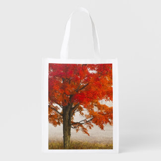 USA, West Virginia, Davis. Red maple in autumn Market Totes