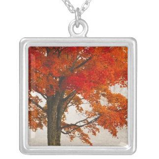 USA, West Virginia, Davis. Red maple in autumn Square Pendant Necklace