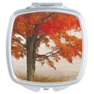 USA, West Virginia, Davis. Red maple in autumn Compact Mirror