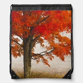 USA, West Virginia, Davis. Red maple in autumn Drawstring Bag