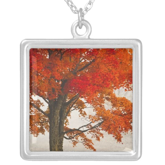 USA, West Virginia, Davis. Red maple in autumn Silver Plated Necklace