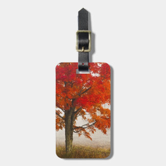 USA, West Virginia, Davis. Red maple in autumn Travel Bag Tags