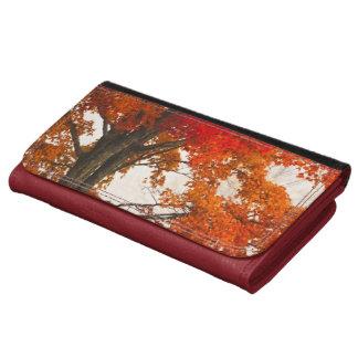 USA, West Virginia, Davis. Red maple in autumn Wallet