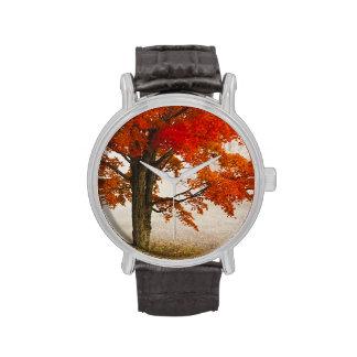 USA, West Virginia, Davis. Red maple in autumn Watch