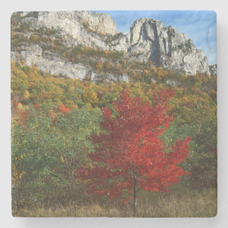USA, West Virginia, Spruce Knob-Seneca Rocks Stone Coaster