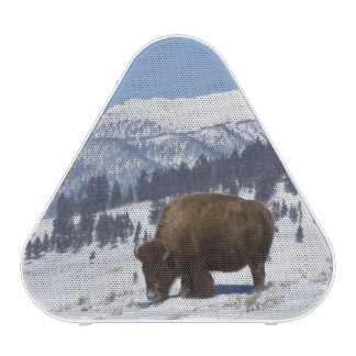 USA, WY, Yellowstone NP, American Bison Bison Bluetooth Speaker