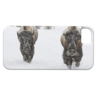 USA, WY, Yellowstone NP, American Bison (Bison iPhone 5 Covers