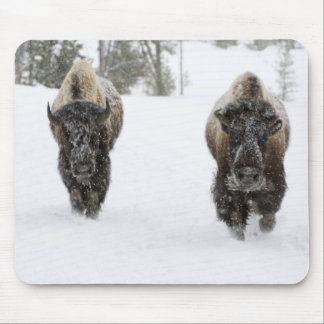USA, WY, Yellowstone NP, American Bison (Bison Mouse Pad
