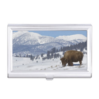 USA, WY, Yellowstone NP, American Bison Bison Business Card Holder