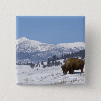 USA, WY, Yellowstone NP, American Bison Bison Pinback Button