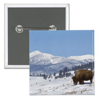 USA, WY, Yellowstone NP, American Bison Bison Pinback Button