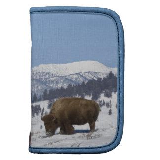 USA, WY, Yellowstone NP, American Bison Bison Organizers