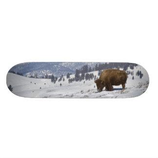 USA, WY, Yellowstone NP, American Bison Bison Skateboard
