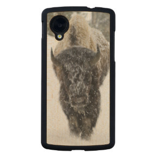 USA, WY, Yellowstone NP, American Bison (Bison Carved® Maple Nexus 5 Case