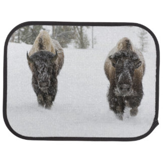 USA, WY, Yellowstone NP, American Bison (Bison Car Mat