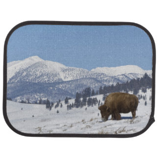 USA, WY, Yellowstone NP, American Bison Bison Floor Mat