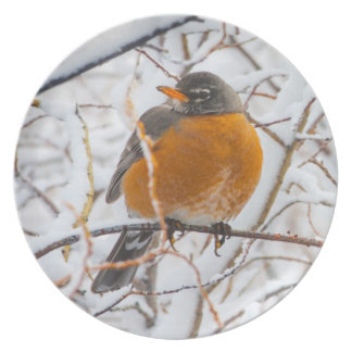 USA, Wyoming, American Robin roosting on willow Dinner Plate