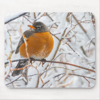 USA, Wyoming, American Robin roosting on willow Mouse Pad