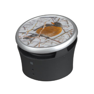 USA, Wyoming, American Robin roosting on willow Speaker