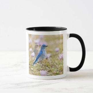 USA, Wyoming, Bighorn Mountains, Medicine Mug