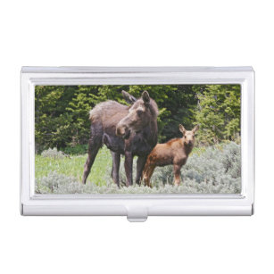 Moose business card holders cases zazzle usa wyoming bighorn mountains moose alces business card holder colourmoves