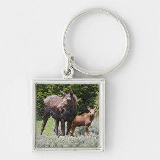 USA, Wyoming, Bighorn Mountains, moose Alces Keychain