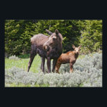 "USA, Wyoming, Bighorn Mountains, moose Alces Photo Print<br><div class=""desc"">USA,  Wyoming,  Bighorn Mountains,  moose (Alces alces) cow and calf feeding in meadow,  June � Larry Ditto / DanitaDelimont.com</div>"